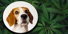 Rauchen verboten: So reagiert dein Hund auf einen Joint