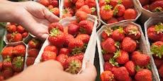 """""""Blutige Beeren"""" auch in österreichischen Supermärkten"""