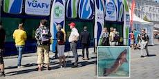 """Hier """"grinst"""" ein Stör aus dem Hauptplatz-Aquarium"""