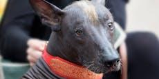 Name des ältesten Hundes der Welt bricht dir die Zunge