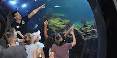 Haus des Meeres bietet wieder Kindergeburtstage an