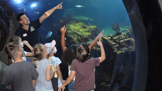 Nach eineinhalb Jahren coronabedingter Pause, darf das Haus des Meeres nun wieder die beliebten Kindergeburtstage anbieten.