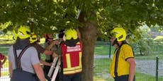 Plötzlich Höhenangst! Teenager vom Baum gerettet