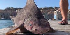Foto von seltenem toten Hai sorgt für mächtig Wirbel