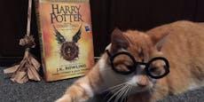 """Dieser Kater macht Jagd auf """"Lese""""-Ratten"""
