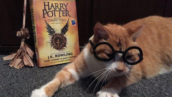 """Die Begeisterung für seine Verkleidung ist Bibliothekskatze """"Horatio"""" ins Gesicht geschrieben, oder?"""
