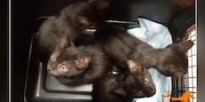 Sechs Katzen-Babys an nur einem Tag in Wien ausgesetzt