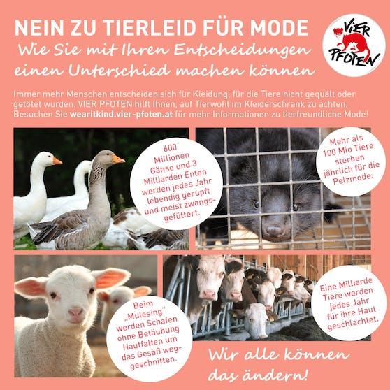 """Das neue Vier Pfoten-Programm """"Wear it Kind"""" fordert Konsumenten und Industrie auf, """"Nein"""" zu Tierquälerei zu sagen. Hier geht's zur Petition """"Wear it Kind""""."""