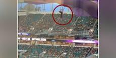 Mitten im Stadion: Katzenleben hängt am seidenen Faden