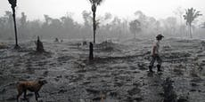 Weltweit 227 Umweltschützer ermordet
