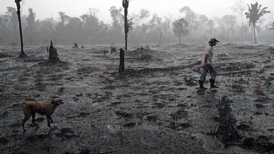 Auf Kosten ihres Lebens kämpfen Umweltaktivisten auf der ganzen Welt gegen Abholzung, Minen oder agroindustrielle Projekte.