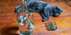 Deshalb musste diese Katze Wodka saufen
