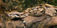 Jetzt gehen Menschen schon mit Schlangen äußerln...