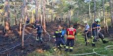 Sechs Feuerwehren und Heli bei Waldbrand im Einsatz