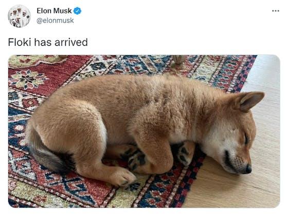 Elon Musk hat dieses Foto auf Twitter gepostet - und einen Krypto-Hype ausgelöst.