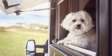 Pfote am Drücker: Hund sperrt Paar aus Wohnmobil aus