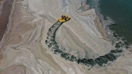 Auch wenn an der Oberfläche kaum mehr etwas von dem Algenschleim zu sehen ist, brodelt es unter der Meeresoberfläche.
