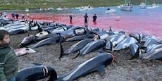 1.500 Delfine in Bucht gelockt und getötet