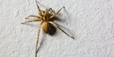 """""""KREISCH"""" - So wirst du deine Spinnenphobie los"""