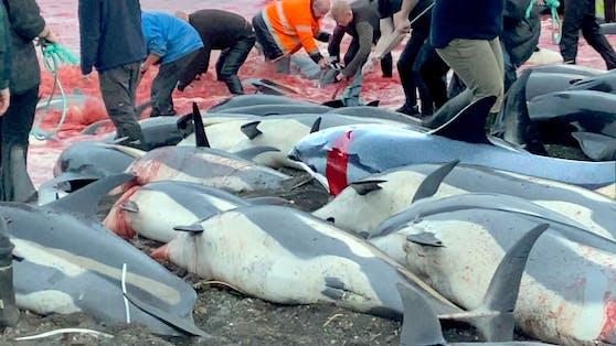 Heuer wurde mit dem Abschlachten von knapp 1.500 Tieren ein neuer Rekord aufgestellt.