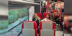 Riesiger Leguan verunsichert Fahrgäste im Zug