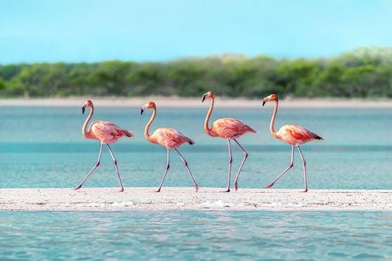 Kyle Minar, United States: Natural World - Wildlife, Sony World Photography Awards 2022.
