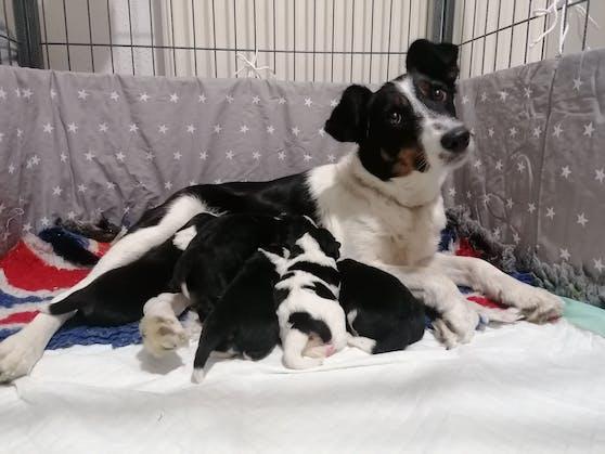"""Im TierQuarTier schenkte """"Mathilda"""" nun fünf gesunden und quietschfidelen Welpen das Leben."""