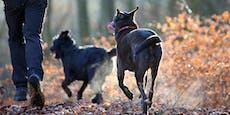 Spaziergang ohne Leine: Hunde beißen Katze tot