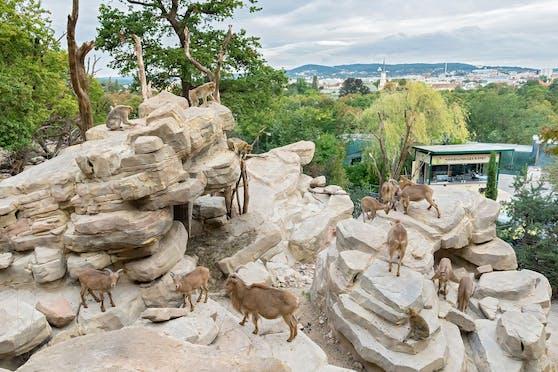 Am 16. September wurde die neue Anlage der Mähnenspringer und Berberaffen im Tiergarten Schönbrunn eingeweiht.
