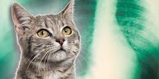 Katze infiziert Besitzerin mit gefährlicher Lungenpest
