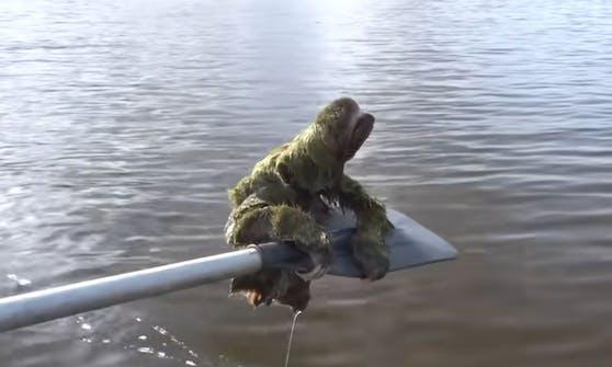 Dieses kleine Faultier hatte sich wohl verschwommen und war auf Hilfe angewiesen.