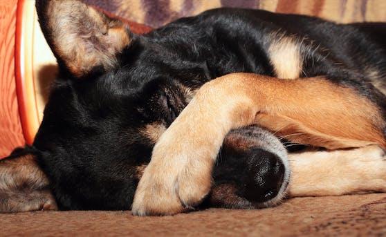 Auch dein Hund kann mal so richtig traurig, fast schon depressiv sein. Was hilft, liest du hier.