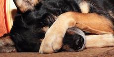 Das solltest du tun, wenn dein Hund traurig ist