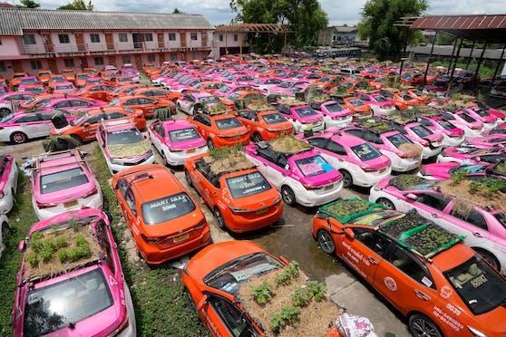 Die unbenützten Taxis von Bangkoks Straßen werden aus der Not heraus zu Mini-Gärten.