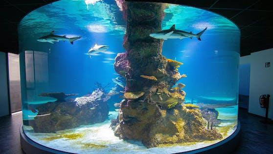 Im Haus des Meeres wurde das 360° Haifischbecken im 07.Stock eröffnet.