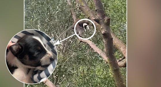 Oh nein! Der Affe verschleppte doch tatsächlich ein kleines Hundebaby.