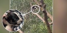 Verschleppt! Affe entführt winziges Hundebaby