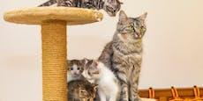 Tierheim St. Pölten ist randvoll mit Tieren