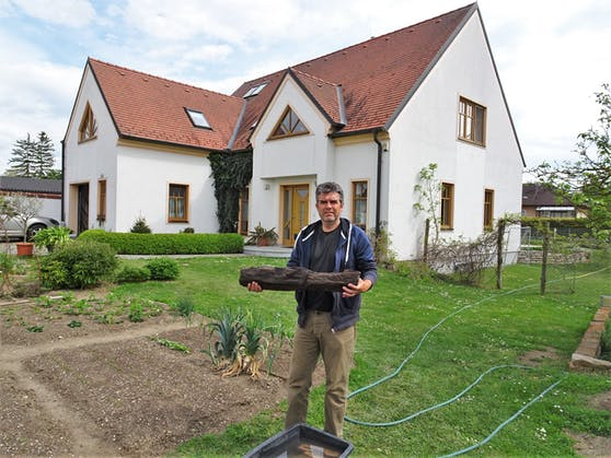 Gerald Patscha aus Aspersdorf (NÖ) fand in seinem Vorgarten beim Graben eines Brunnens 1.000 Jahre alte Holzstücke eines mittelalterlichen Brunnenschachtes.