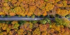 """Drohnenbilder machen """"durstige"""" Bäume erkennbar"""