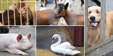 Pfotenhilfe Lochen: Wo Hunde rollen und Kühe humpeln