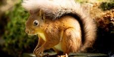 So hilfst du Eichhörnchen über strenge Winter