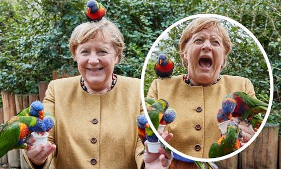 Während eines Besuches im Vogelpark Marlow, wurde die deutsche Bundeskanzlerin gebissen.