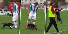 """""""Dognaldo"""" Frecher Hunde-Flitzer schiebt Kicker Gurkerl"""