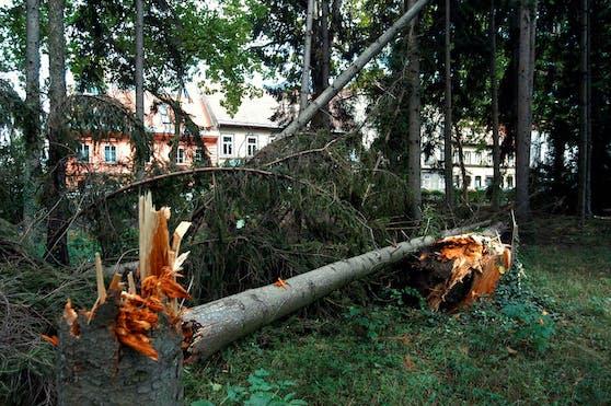 Die Sturmböen könnten Bäume umstürzen und Äste abbrechen lassen. Symbolbild