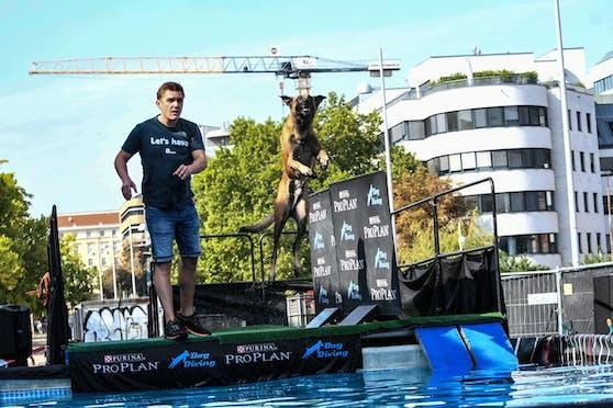 Im Zuge der Haustiermesse fand am 26. September das Europameisterschaftsfinale im Dog Diving statt.