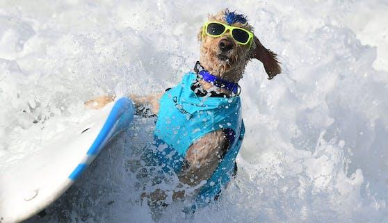 Bereits zum zwölften Mal fand der jährliche Hunde-Surf Wettbewerb am 25. September am kalifornischen Huntington Beach statt.