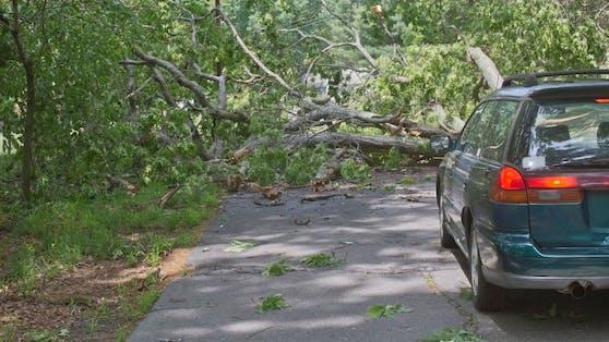 Ein Baum stürzte auf die Postalmstraße. Symbolbild