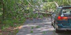 Baum schlägt nur Zentimeter hinter Paar in Cabrio ein