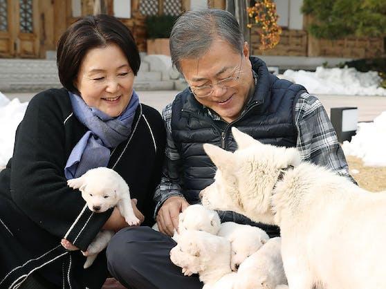 Südkoreas Präsident Moon Jae-a und seine Frau bekamen sechs Pungsan-Welpen von Nordkoreas Diktator Kim Jong Un geschenkt.